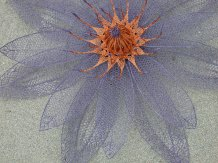 blue_lily_detail1