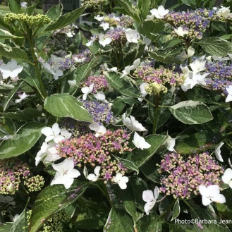... flowers seen through Barb's eyes...